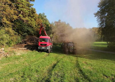 Referenz Baumpflege