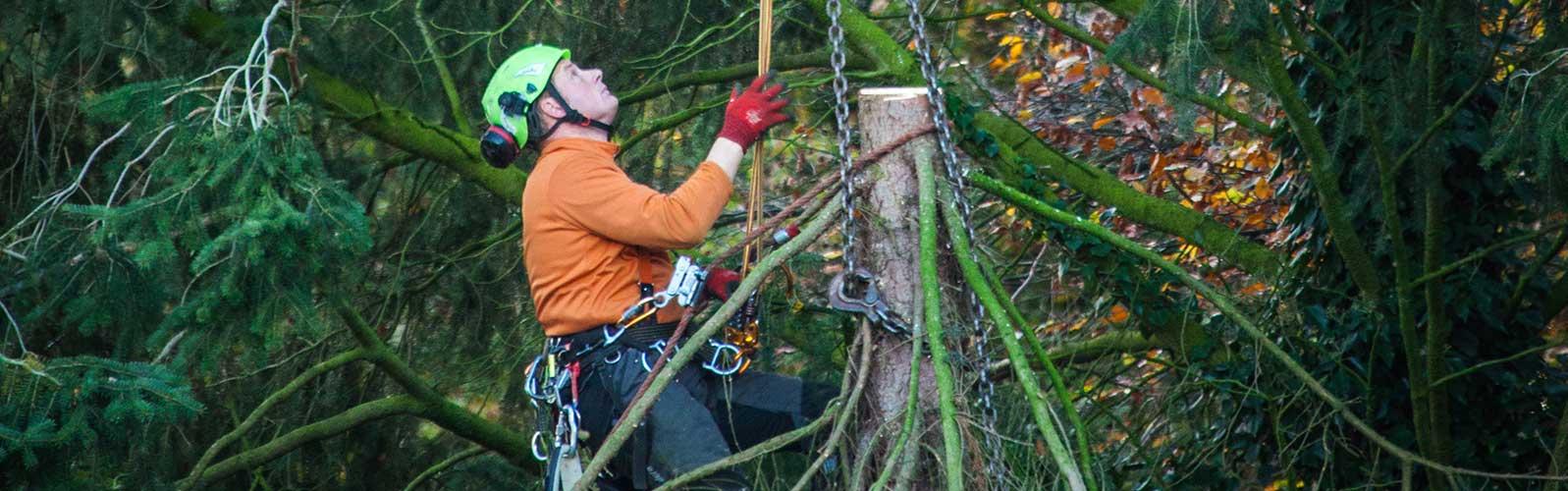 Maschinenring Starnberg Baumpflege
