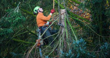 Baumpflege von Maschinenring Starnberg